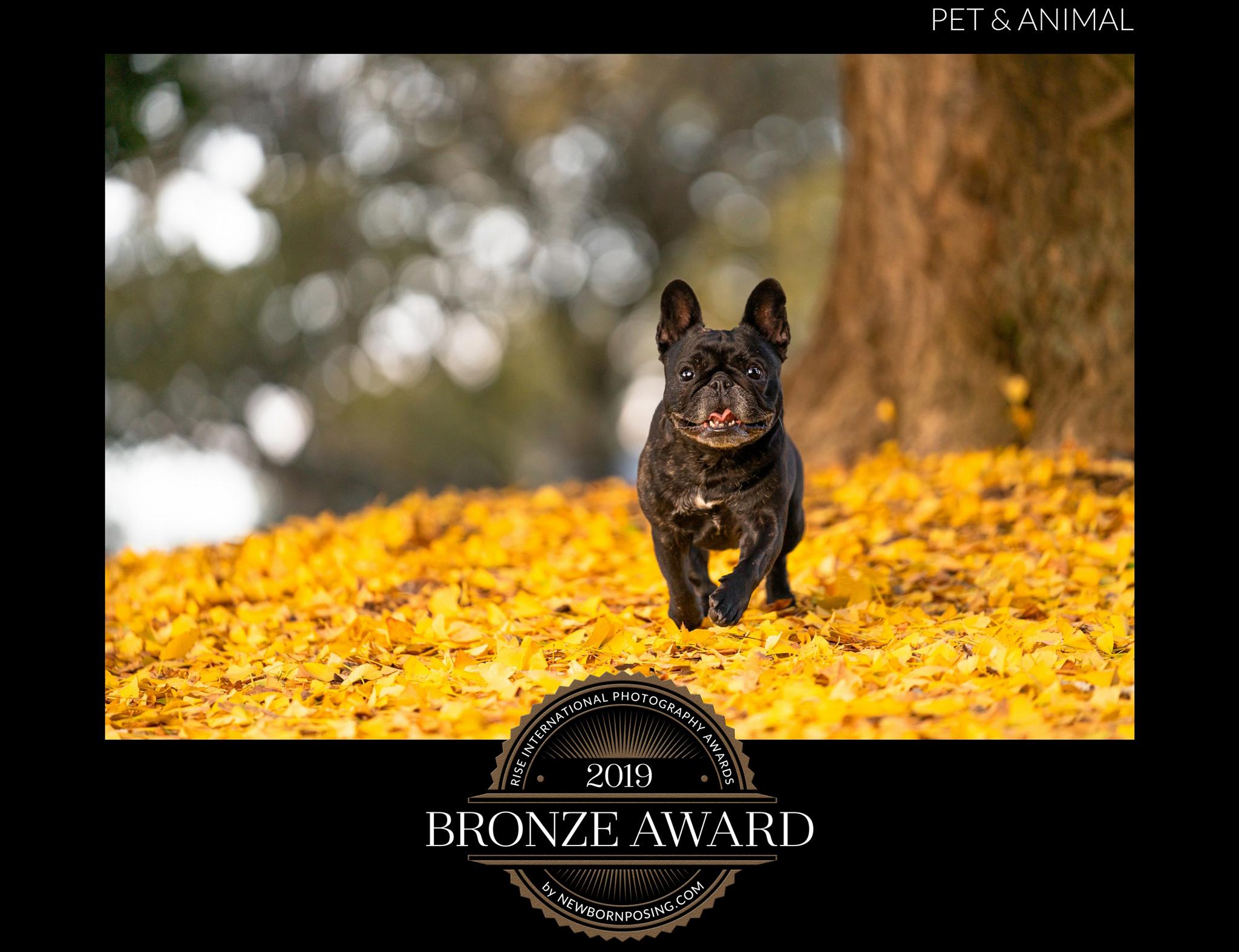 Golden-Leaves---Rise-Awards-2019