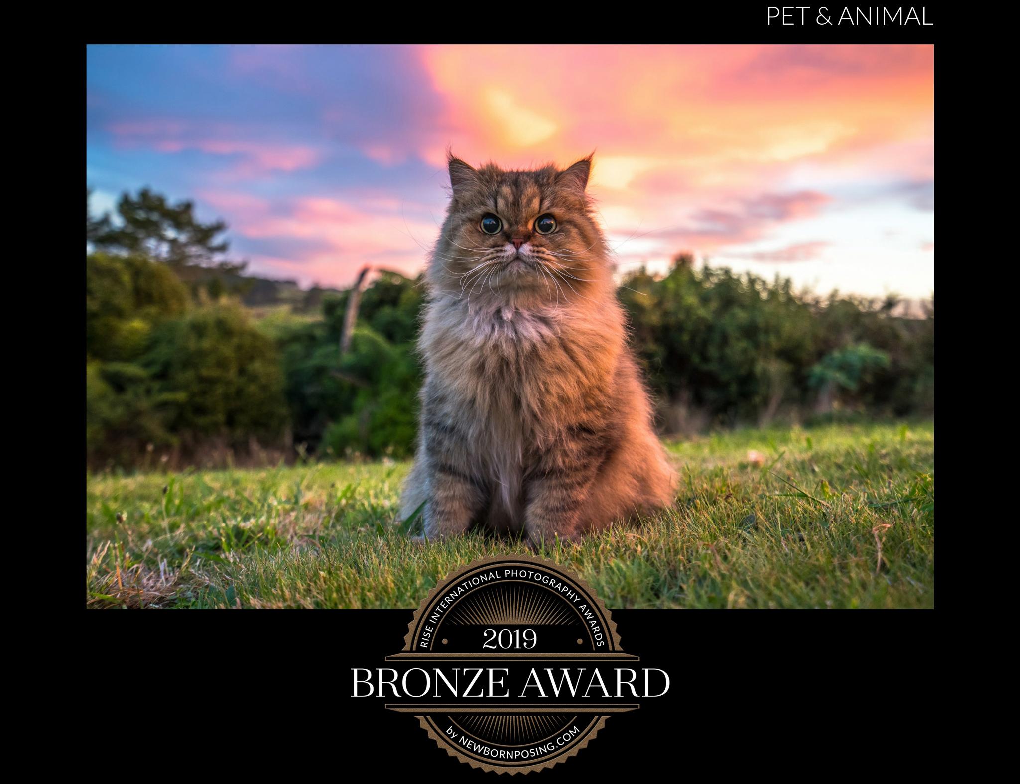 Pink-Glow---Rise-Awards-2019